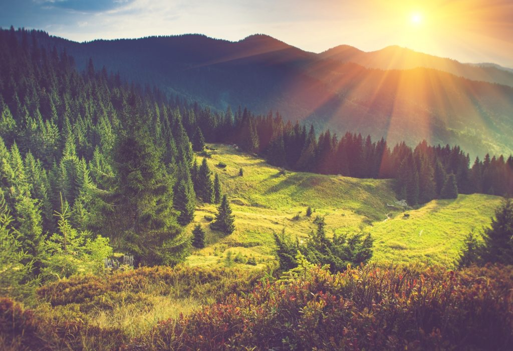 Lush green mountain forest and rays of sunlight