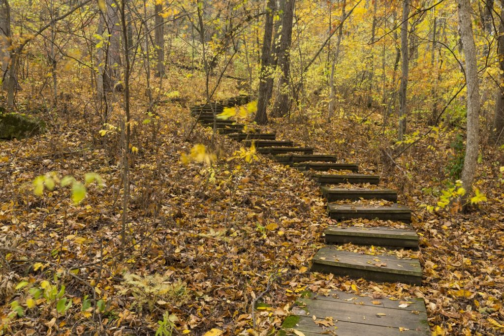 steps on path in woods
