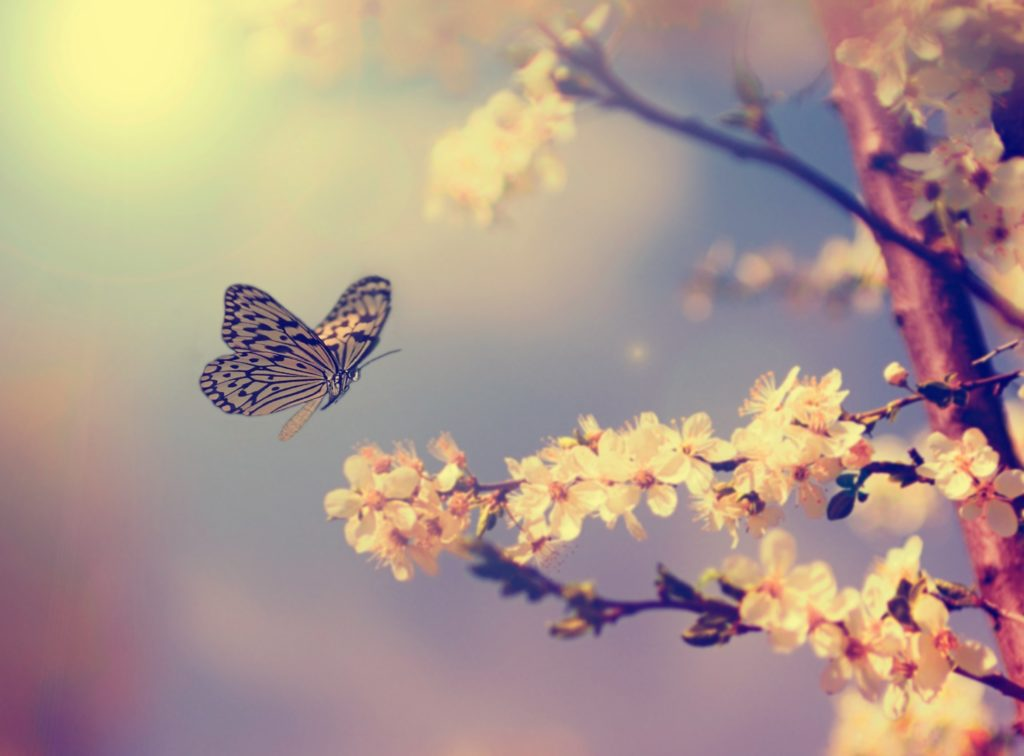 appreciate life, beauty, and other miracles